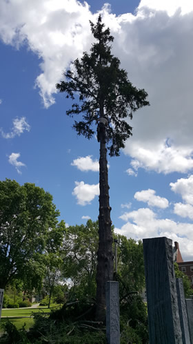 Projects completed by Burman Land and Tree Company | Orrington Maine | Tree Assessment and Consultation, Dutch Elm Disease Specialist and Vegetation Management.